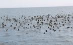 Seabirds Paradise